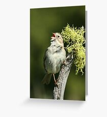 Brewer's Sparrow, adult breeding Greeting Card