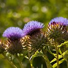 Purple Thistles by evilcat