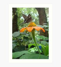 Long-tailed Skipper on Mexican Sunflower Art Print