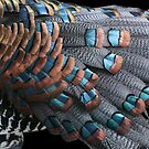 Copper-tipped Ocellated Turkey Feathers by DebiDalio