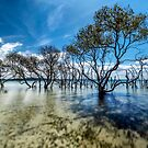 Mangrove paradise by Adriano Carrideo