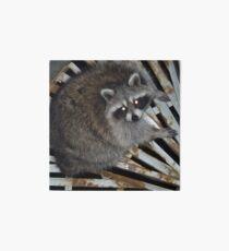 Raccoon Art Board