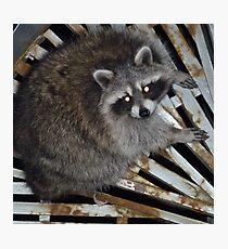 Raccoon Photographic Print