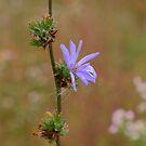 Fall Prairie Flower by Adam Kuehl
