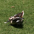Kookaburra in Lane Cove National Park IV by MoonlightJo