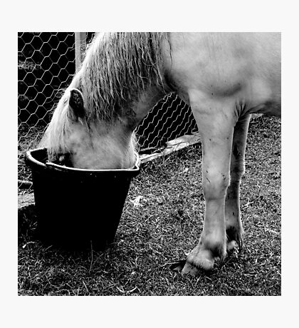 a little hoarse Photographic Print