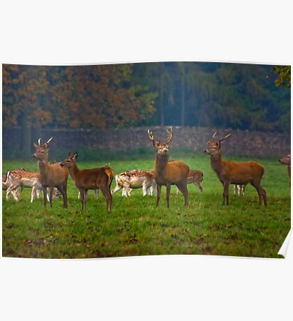 The Young Bucks  (Red Deer) Poster
