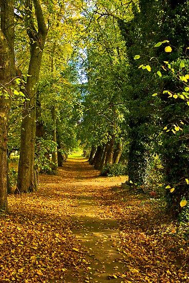 Autumn Path by Trevor Kersley