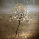 Lonesome tree by Olav Lunde