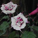 Trumpet Flower by NeNe55