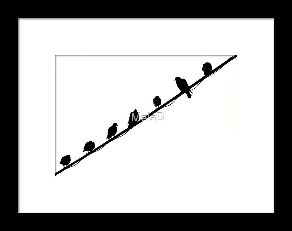 Pigeons by MelaB