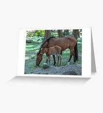 Wild horses on Hawaii Greeting Card