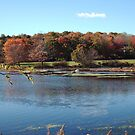 Loantaka Pond NJ by Monica Engeler