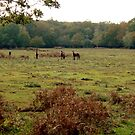 New Forest Ponies by Gordon Hewstone