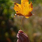 To the Golden Leaf  by Vonnie Murfin
