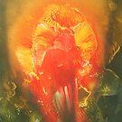 Flaming Iris by linmarie