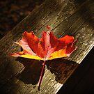 Fallen Leaf by Ray4cam