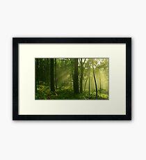 Limelight.. Framed Print