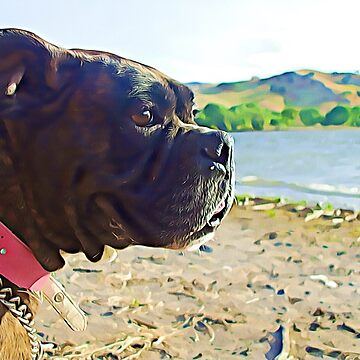 Boxer dog overlooking a lake by ritmoboxers