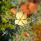 Warrumbungle Weed by Richard  Windeyer