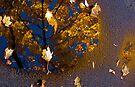 Pavement Art by Jeannette Sheehy