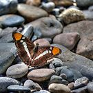 Butterfly With A Decorative Pattern by Diego Re