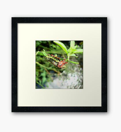 Me and my pretty red shoes... Framed Print