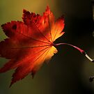 Autumn's Shadow by Kenneth Haley