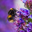 The Beauty of Bee Bokeh by TomRaven