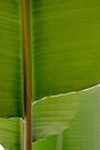 Banana Leaf in Abstract 0527 by Larry Costales