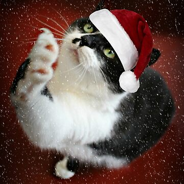 Paws up who`s been good for Santa by Ladymoose