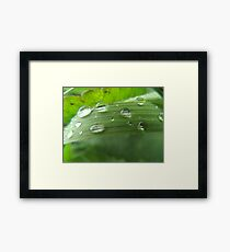 WATER DROPS GRASS H2O DEW Framed Print