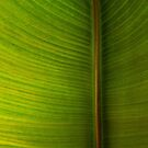Banana Leaf in Abstract 0528 by Larry Costales