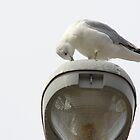 Gull in Prayer by henuly1