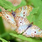 White Peacock Butterflies by Dawne Dunton