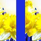 Daffodils blue yellow watercolor  von Irisangel