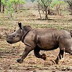 """*WHITE RHINOCEROS* - Ceratotherium simum - YES! I CAN DO IT ! (EVER SEEN A BABY RHINO... """"TAKE OFF"""")   by Magriet Meintjes"""