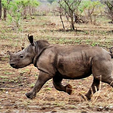 "*WHITE RHINOCEROS* - Ceratotherium simum - YES! I CAN DO IT ! (EVER SEEN A BABY RHINO... ""TAKE OFF"")   by mags"