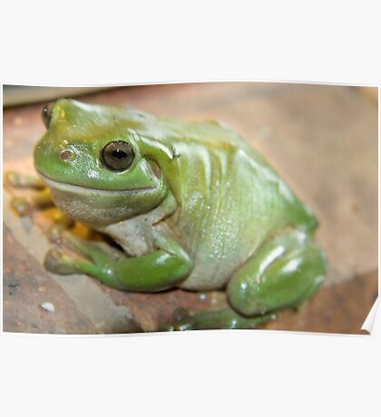 Smiley Frog Stock Photos, Images, & Pictures - 83 Images