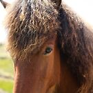 The Icelandic Horse by Chiarina