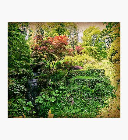 Batsford Arboretum Photographic Print