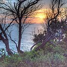 Reaching For The Light - Mona Vale Headland - The HDR Experience by Philip Johnson