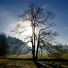 Silhouetted Tree In Winter by mcworldent