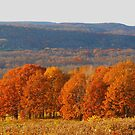 Fall in the Mountains by Judy Gayle Waller