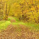Autumn Walk in the Woods  by lorilee