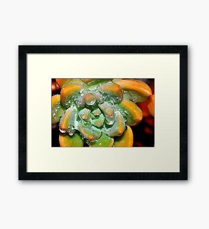 Cactus Bliss Framed Print