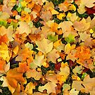 Golden Leaves In Autumn by mcworldent