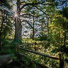 Rustic Fenceline by Colin Metcalf