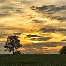 Silhouette Tree Sunset  by KellyHeaton