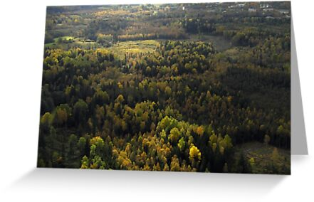 Autumn from helicopter by Antanas